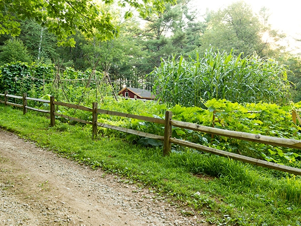 Organic farm and garden in New England