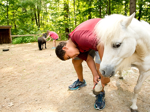 Boy caring for white miniature horse on the farm