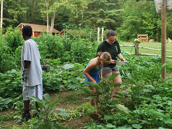 Campers and counselor harvesting fresh and organic herbs in the garden