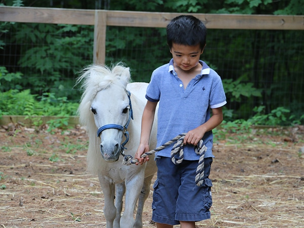 Young boy caring for small white horse on farm