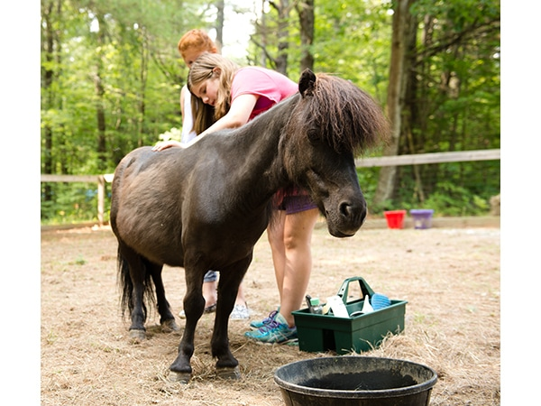 Girls brushing and caring for brown miniature horse on the farm at summer camp