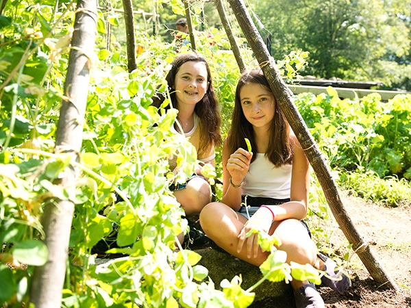 Young girls harvesting organic beans and vegetables in garden in New Hampshire